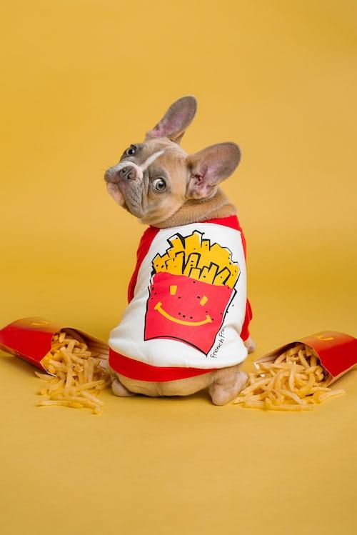 Köpekler için sağlıklı besinler