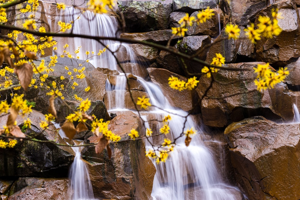 yellow flowers on brown rock formation