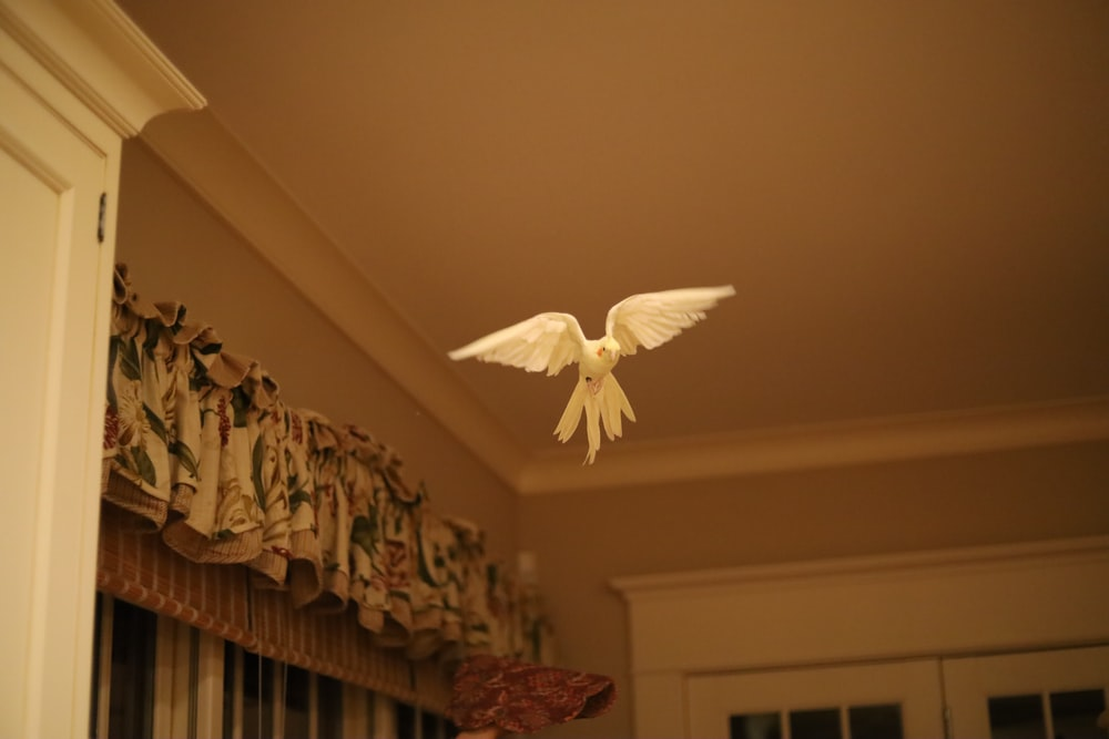 white butterfly on white wall