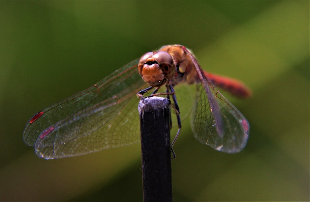 brown and black dragonfly perched on brown stick in close up photography during daytime