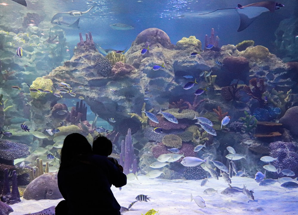people standing in front of fish tank