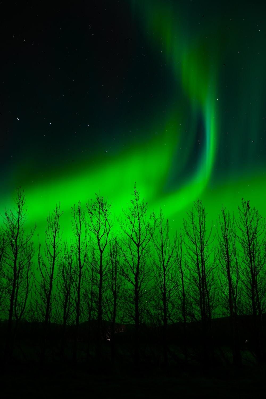 purple and green light in dark room