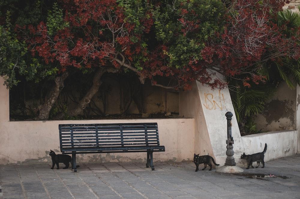 black wooden bench near brown tree