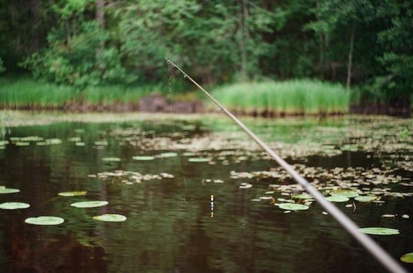 Fishpic