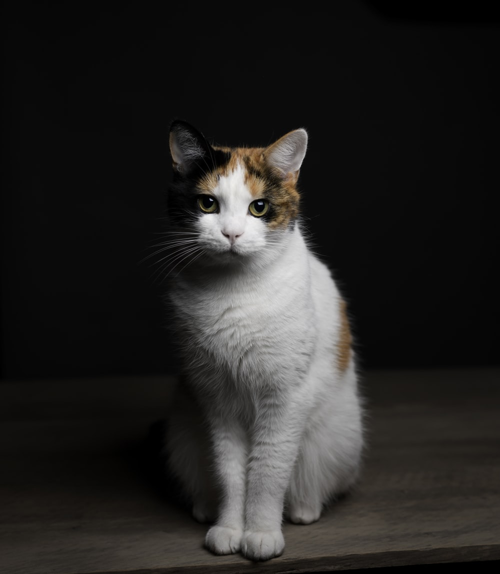 white and orange cat on brown wooden table