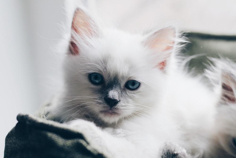 white kitten on white textile
