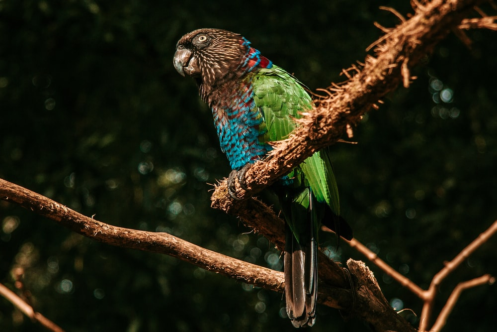 blue green and yellow bird on brown tree branch during daytime