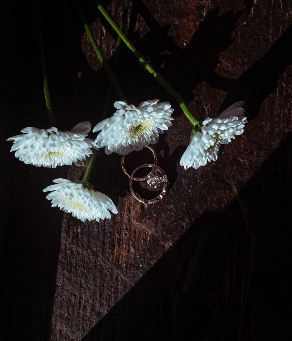 white flower on brown wooden surface