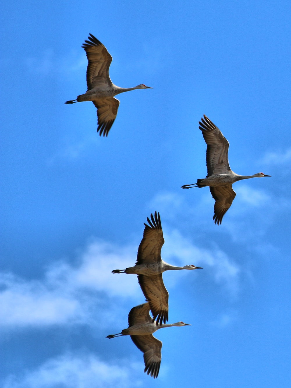 three white birds flying under blue sky during daytime