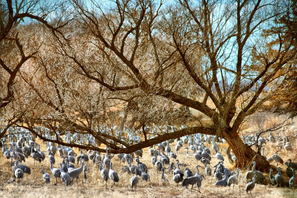 white sheep on brown tree during daytime