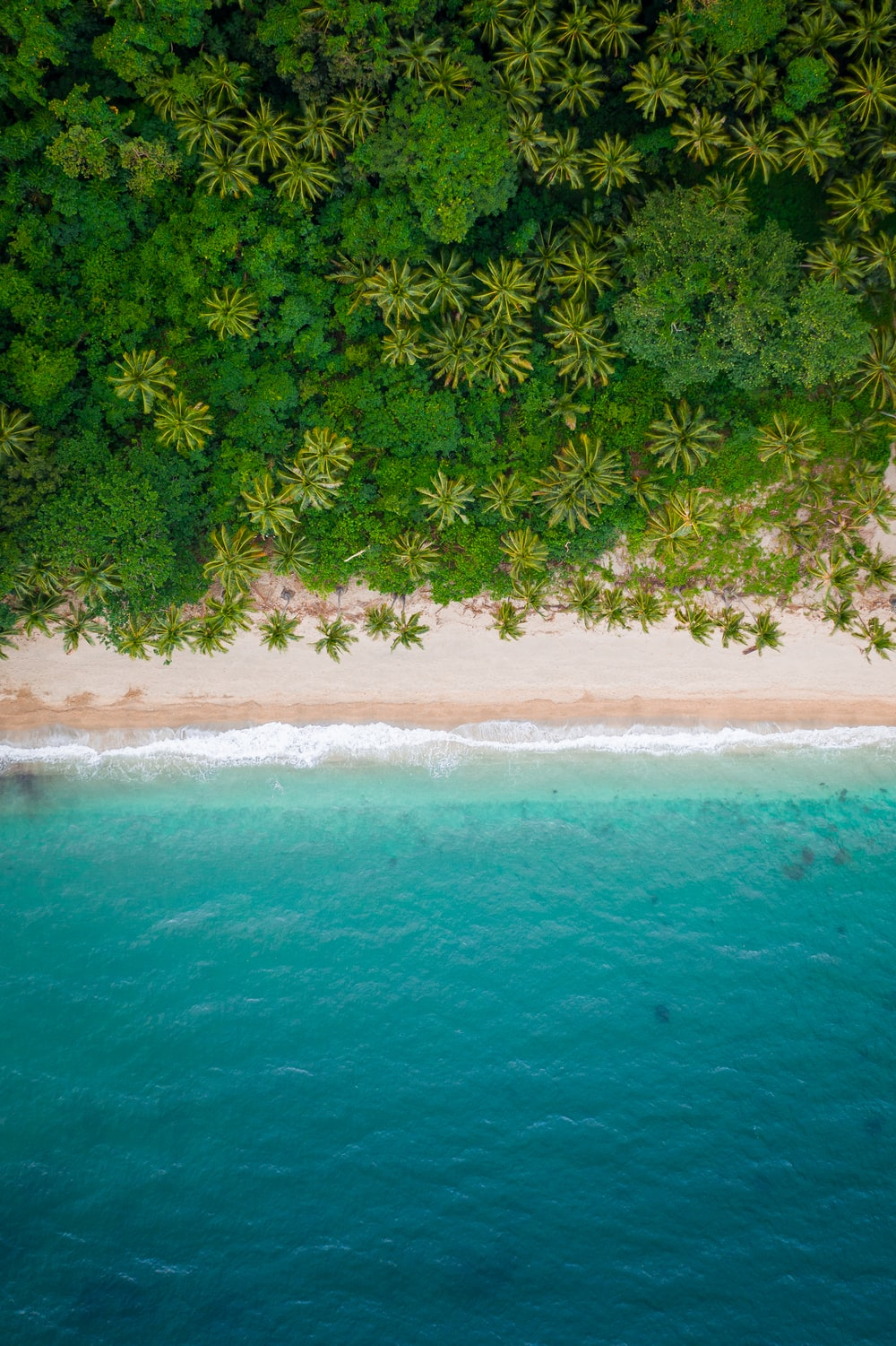 aerial view of green trees on beach during daytime