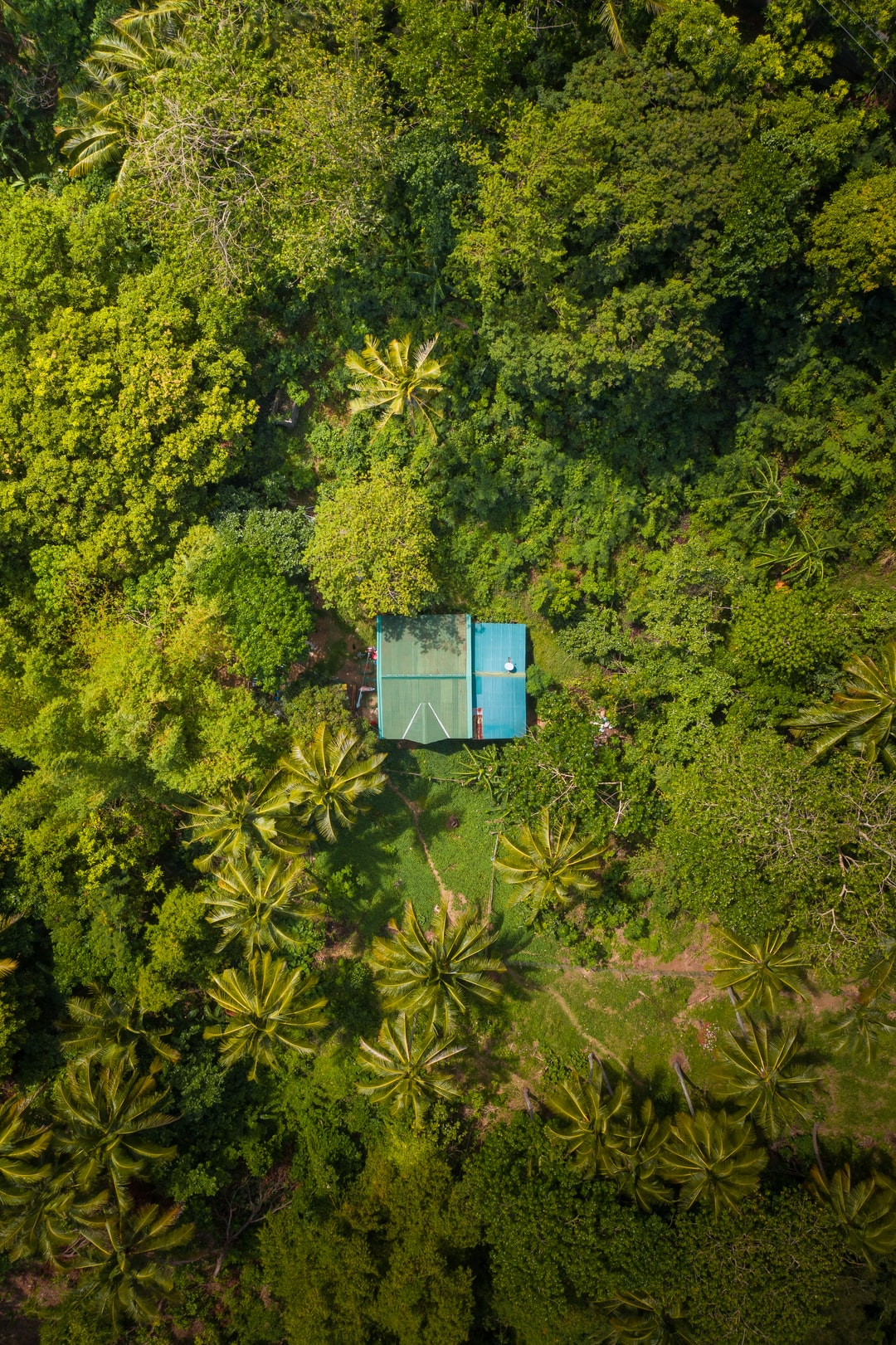 House in the jungle, Mindoro, Philippines