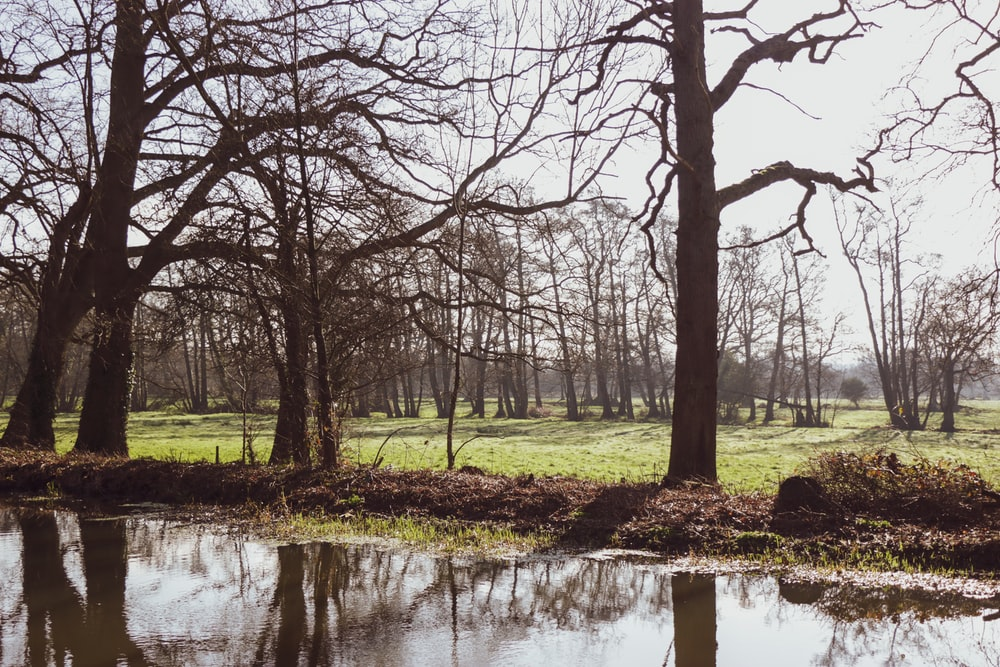 leafless trees on green grass field near river during daytime