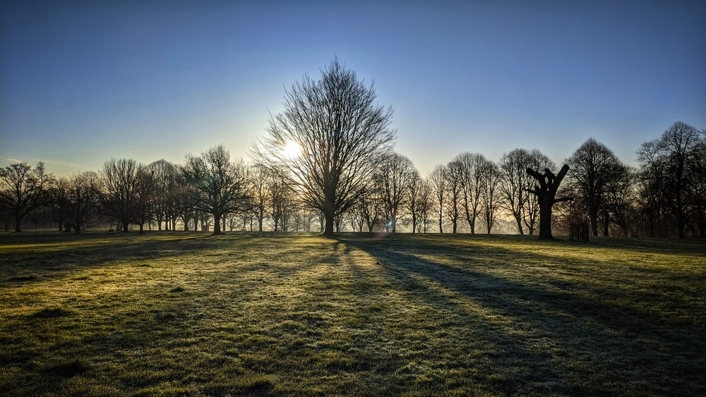 leafless trees on green grass field during daytime