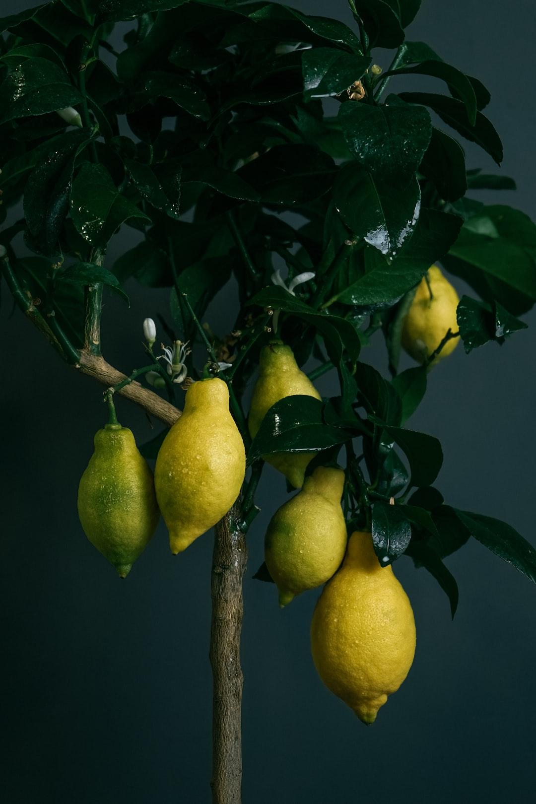 Lemon 🌱 🍋