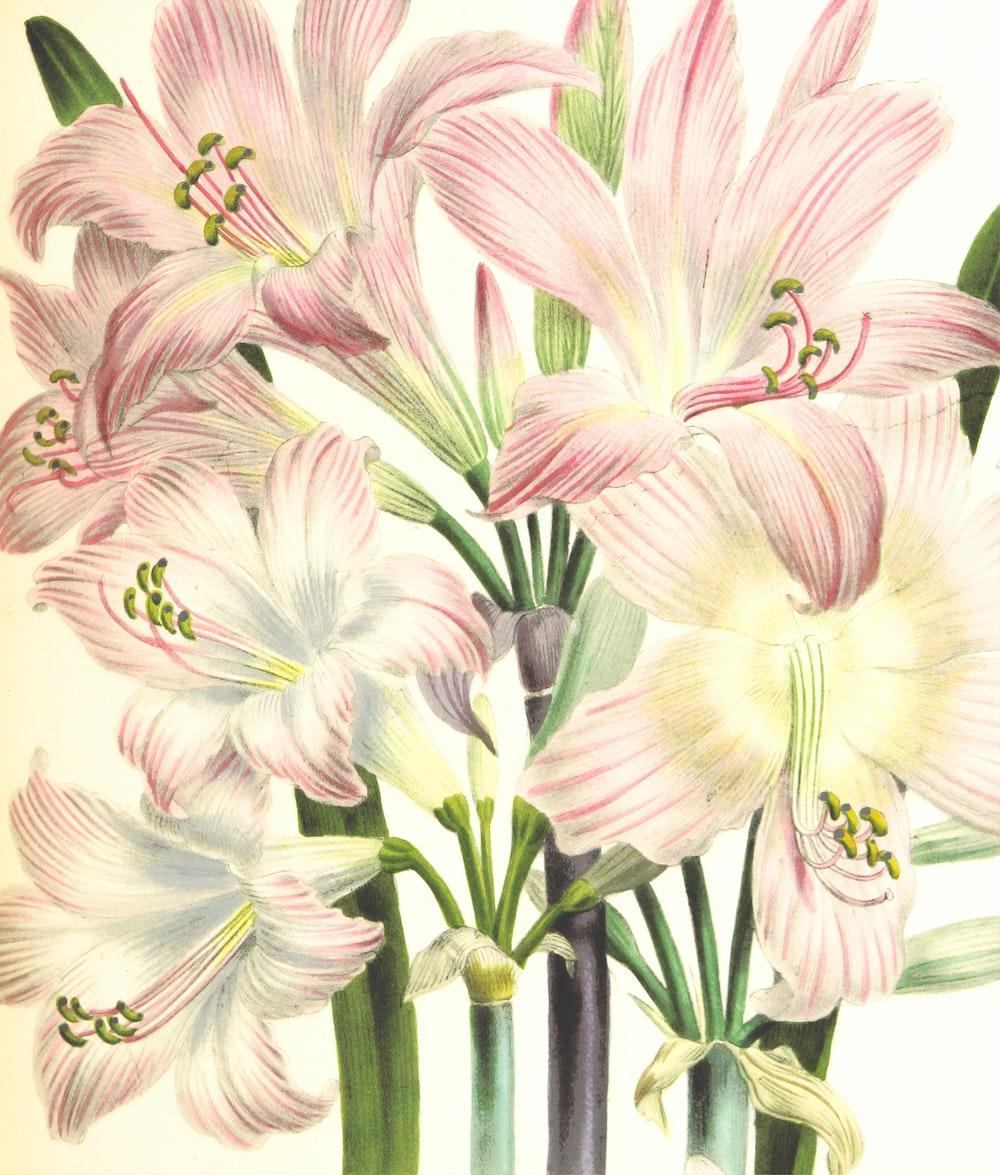 white and purple flower illustration
