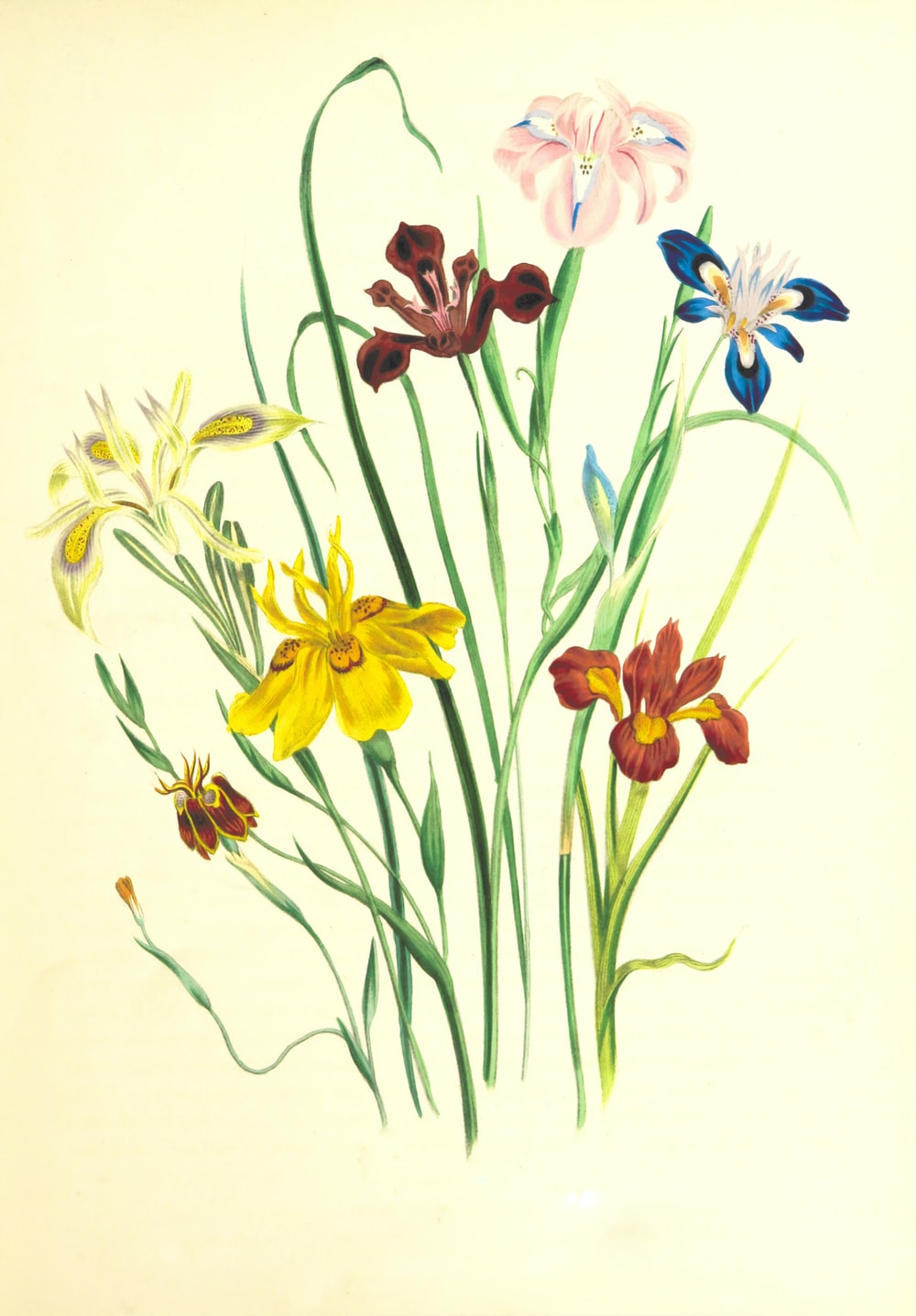 yellow and purple flowers painting