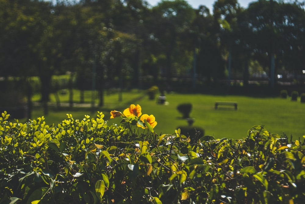 yellow flowers on green grass field during daytime