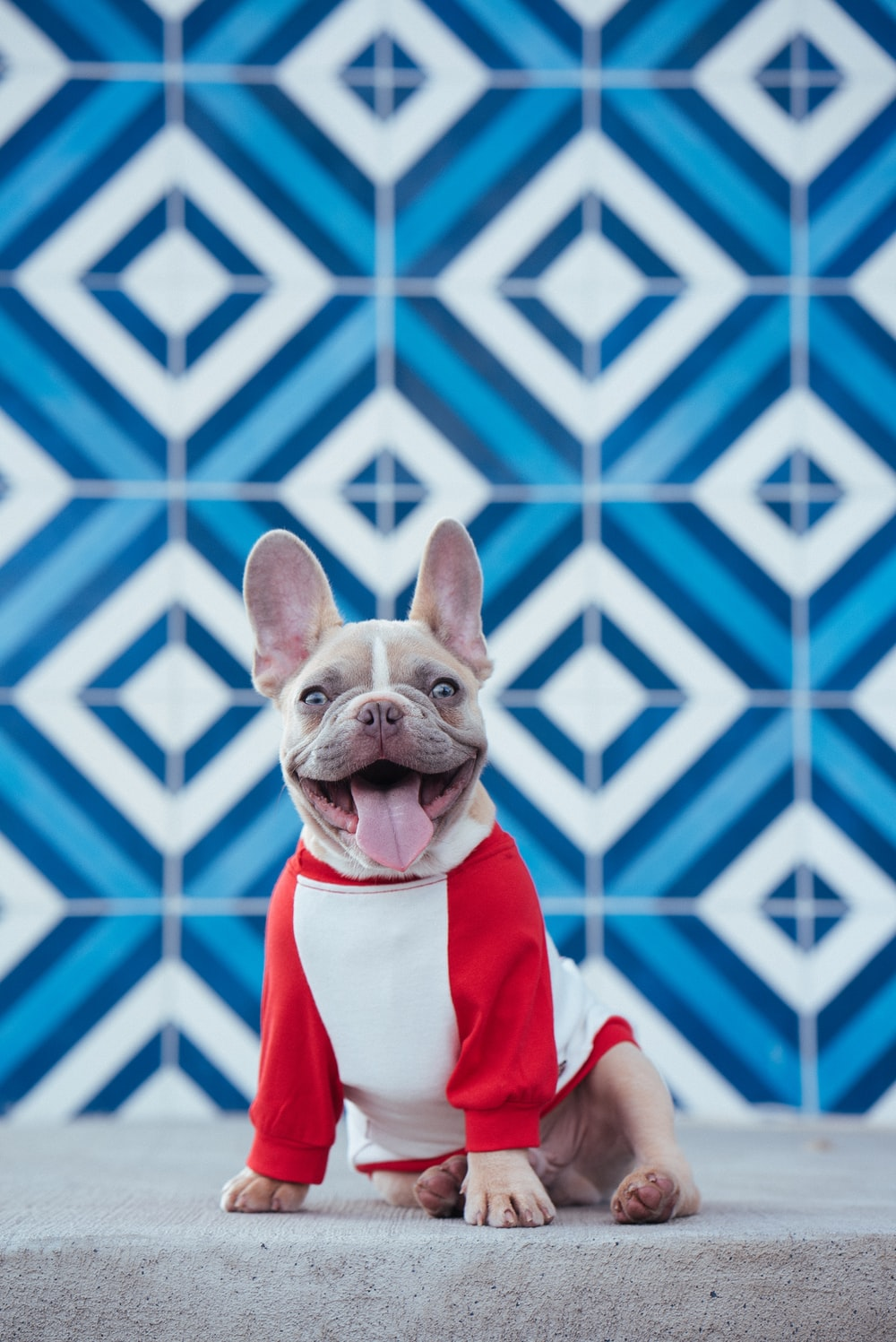 brown short coated dog wearing red and white santa costume