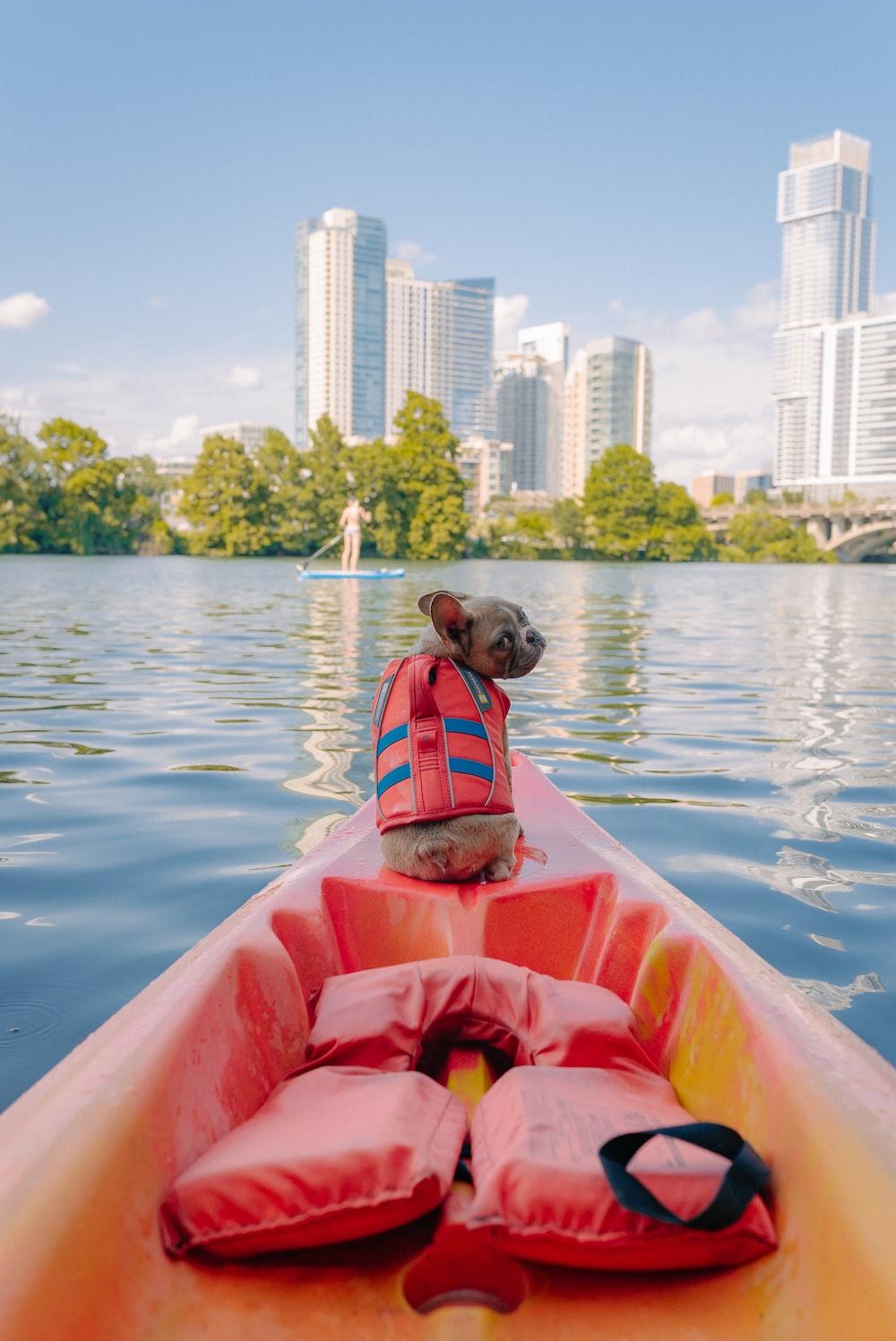 brown short coated dog on orange kayak on body of water during daytime