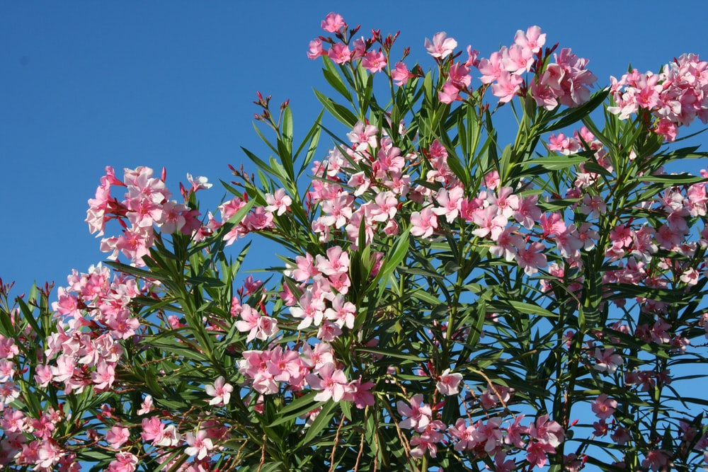 pink and white flowers under blue sky during daytime