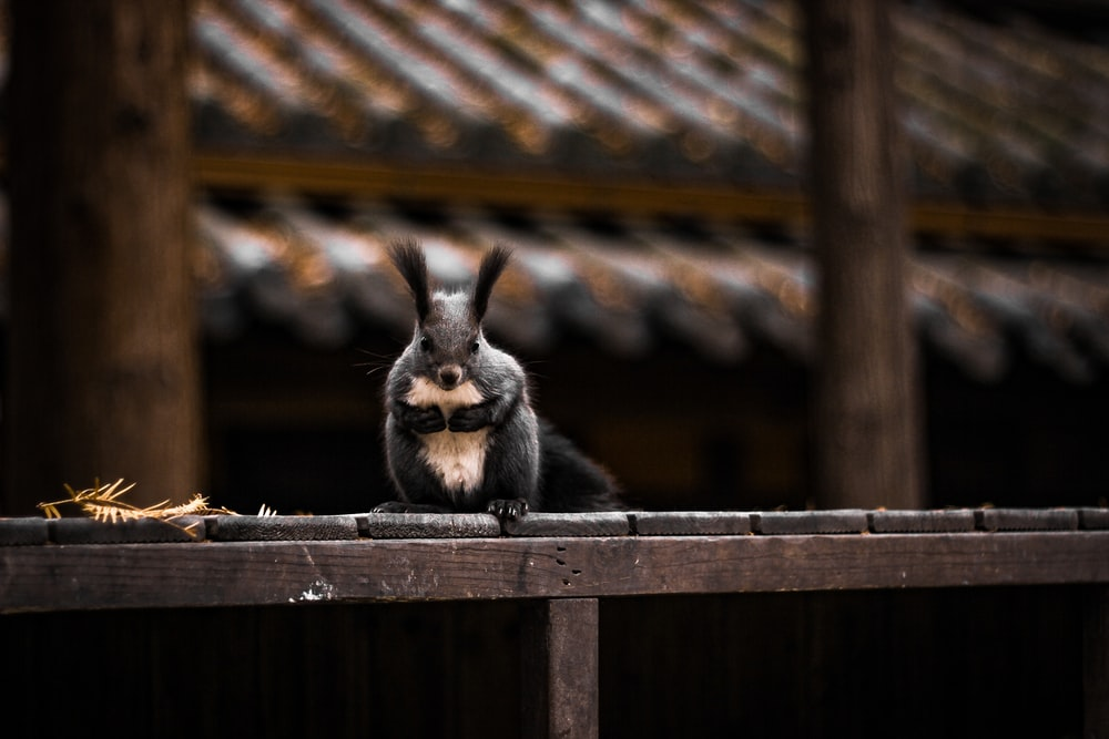 black and brown rabbit on brown wooden fence