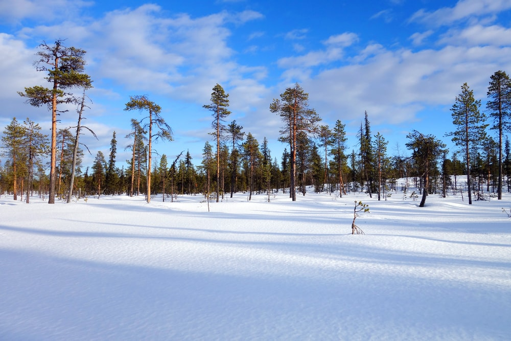 green trees on snow covered ground under blue sky during daytime
