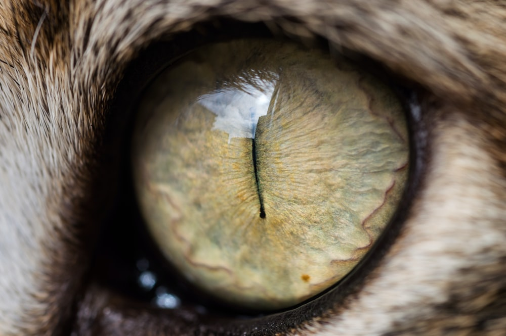 brown and black eye in close up photography