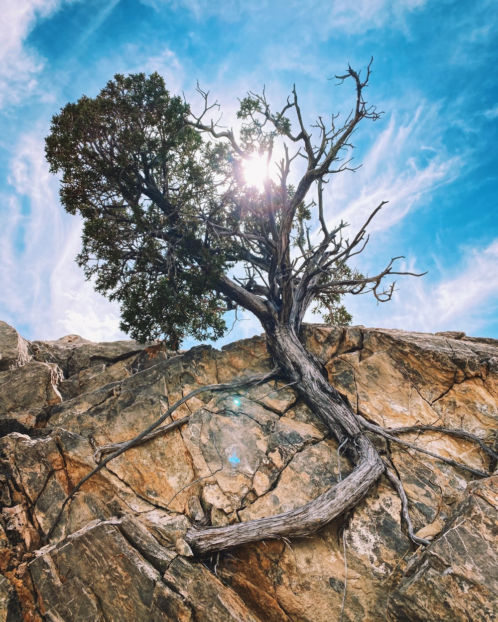 green tree on brown rock formation under blue sky and white clouds during daytime