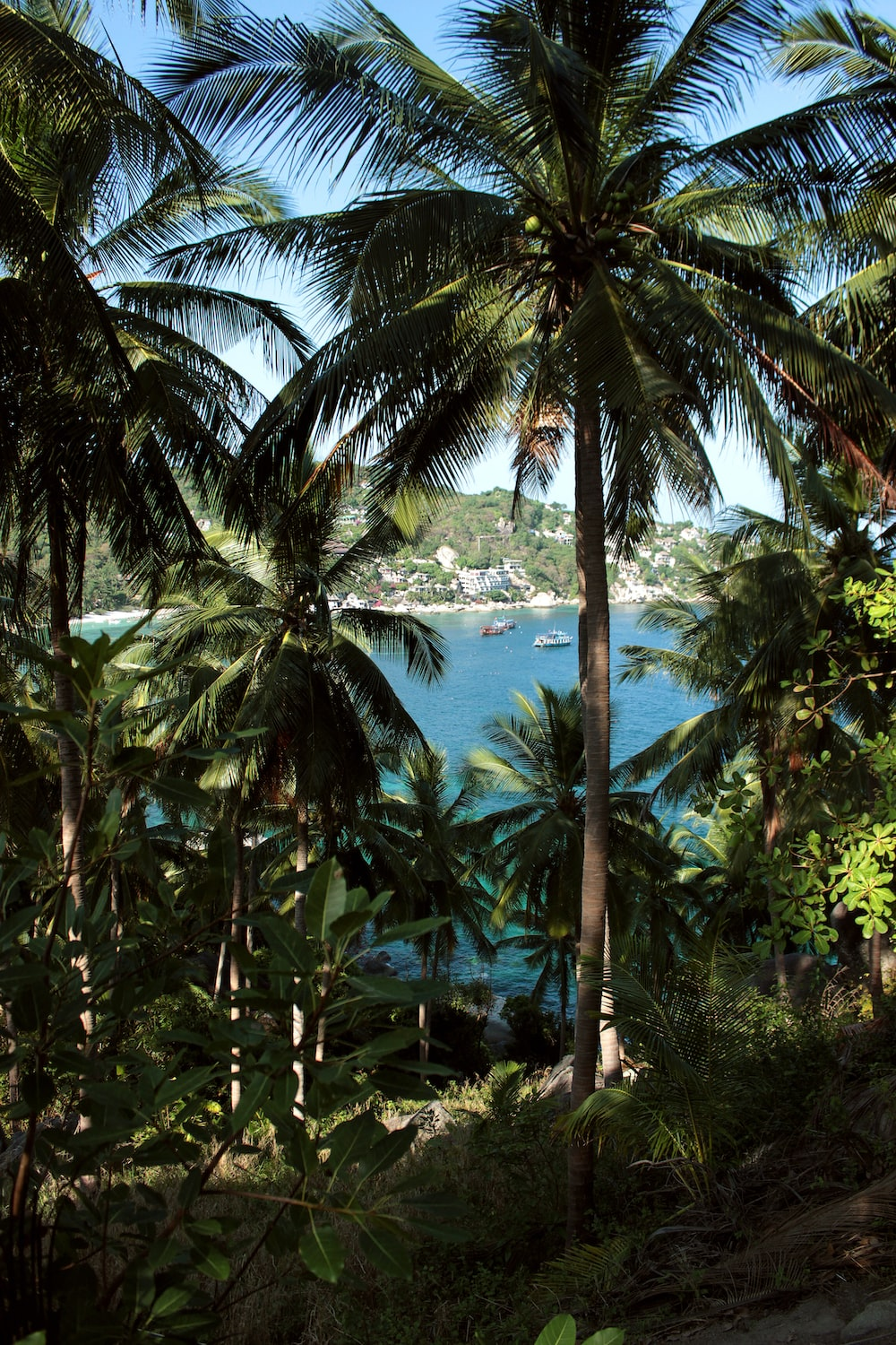 green coconut palm trees near body of water during daytime