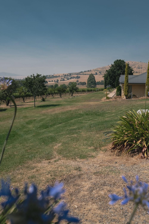 green grass field near house during daytime