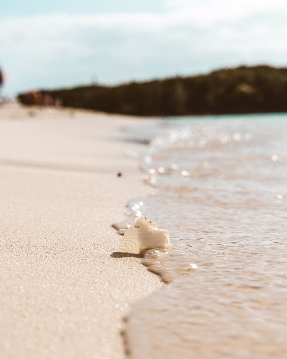 white sea shell on beach during daytime