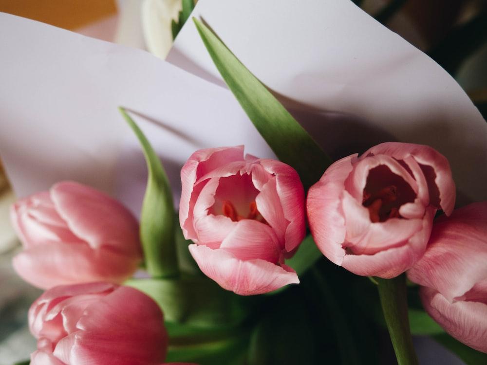 pink and white flower on white ceramic vase
