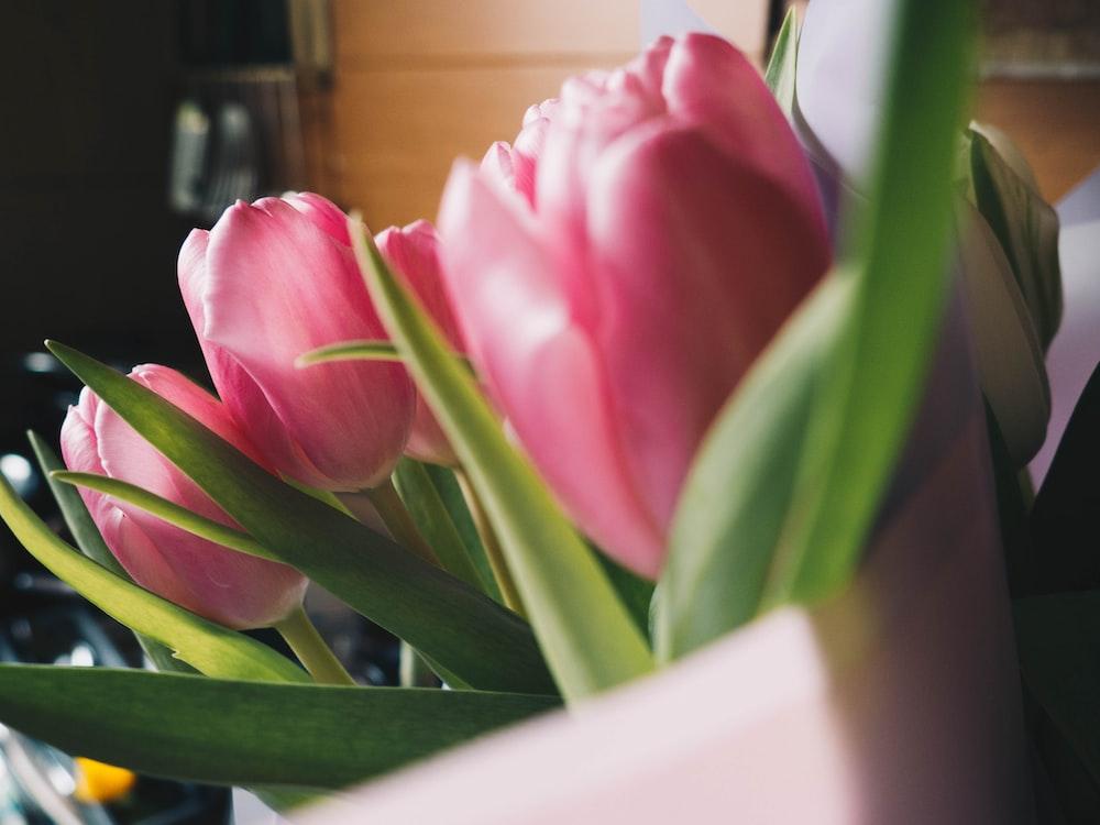 pink tulip in white ceramic vase