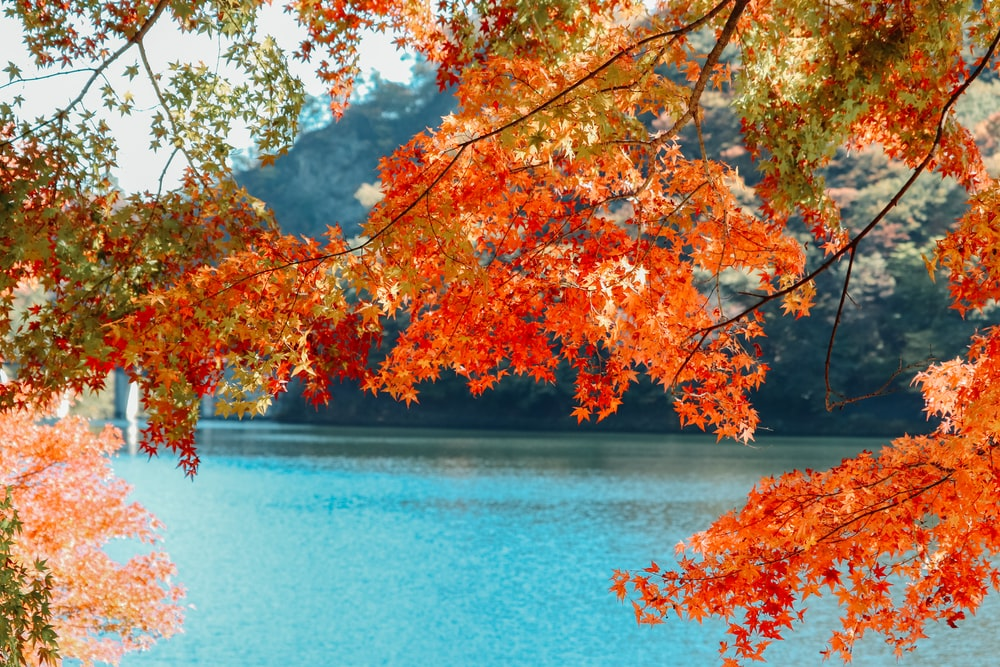 brown and yellow leaves tree near body of water during daytime