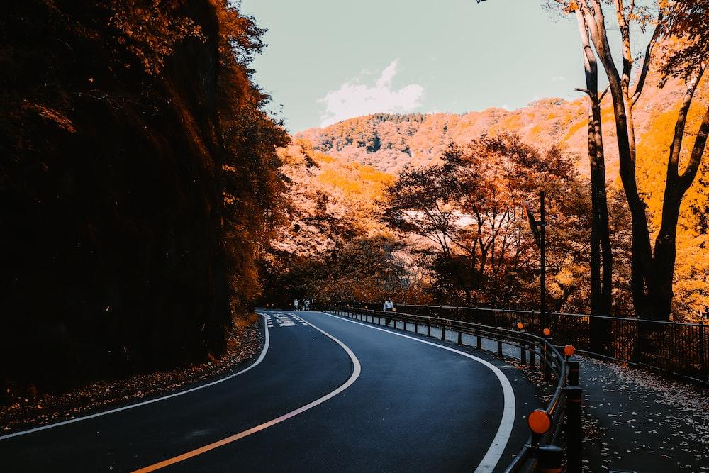 black car on road between brown trees during daytime