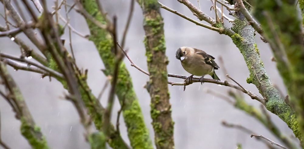brown and white feathered bird on brown tree branch