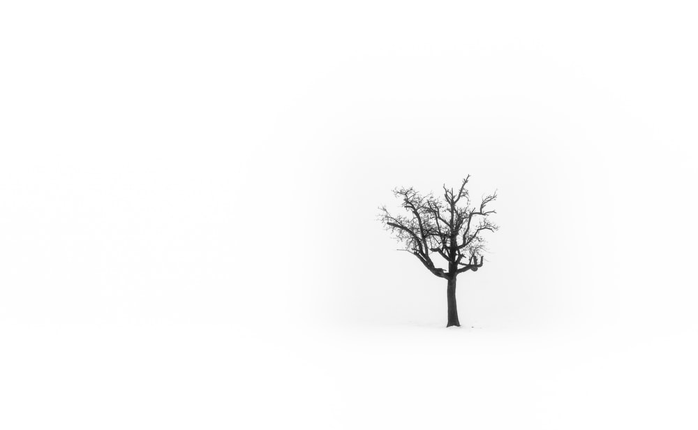 leafless tree on white snow covered ground
