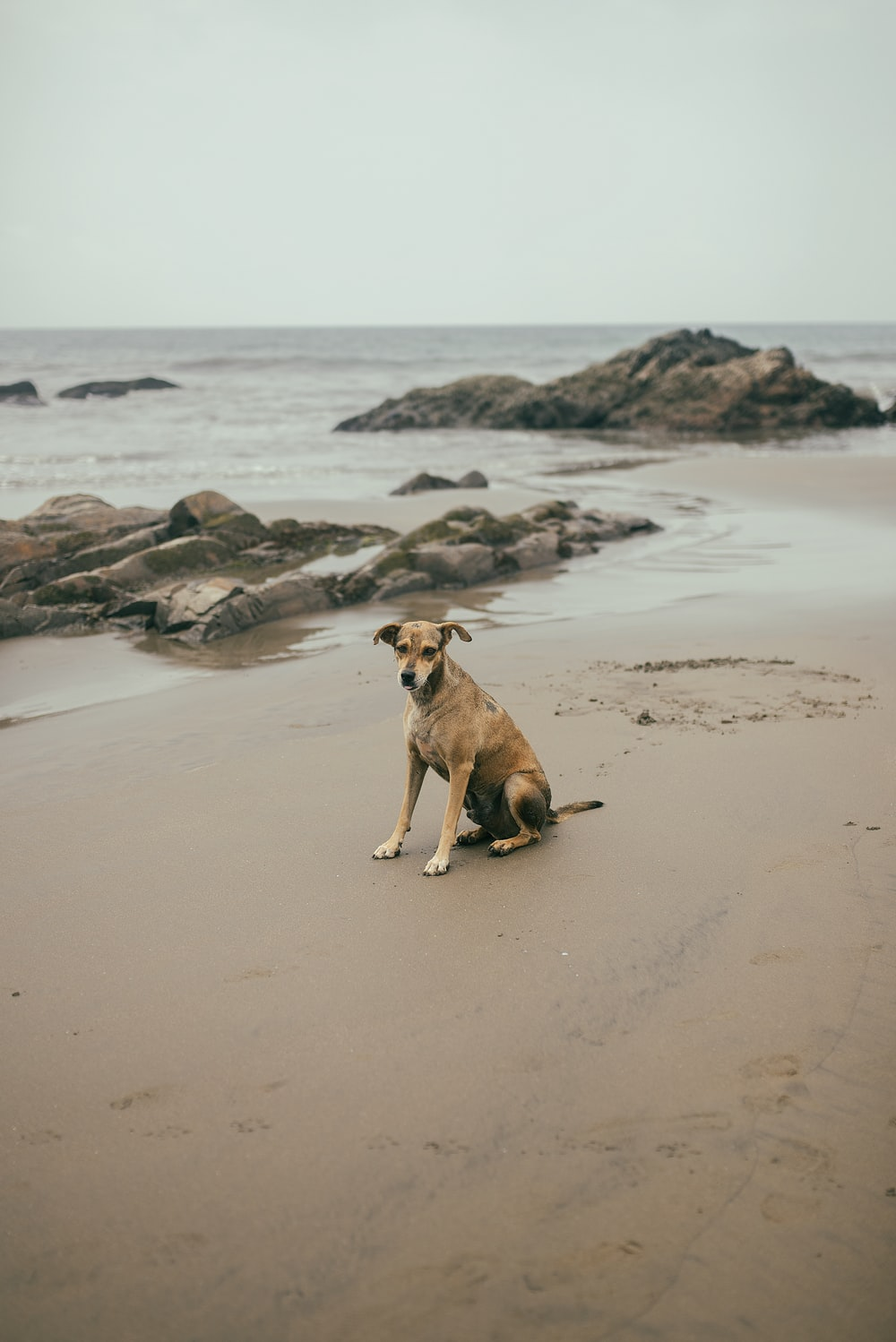 brown short coated dog on brown sand near body of water during daytime