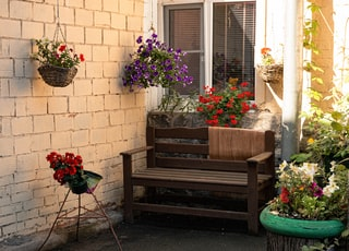 red and white flowers on brown wooden bench