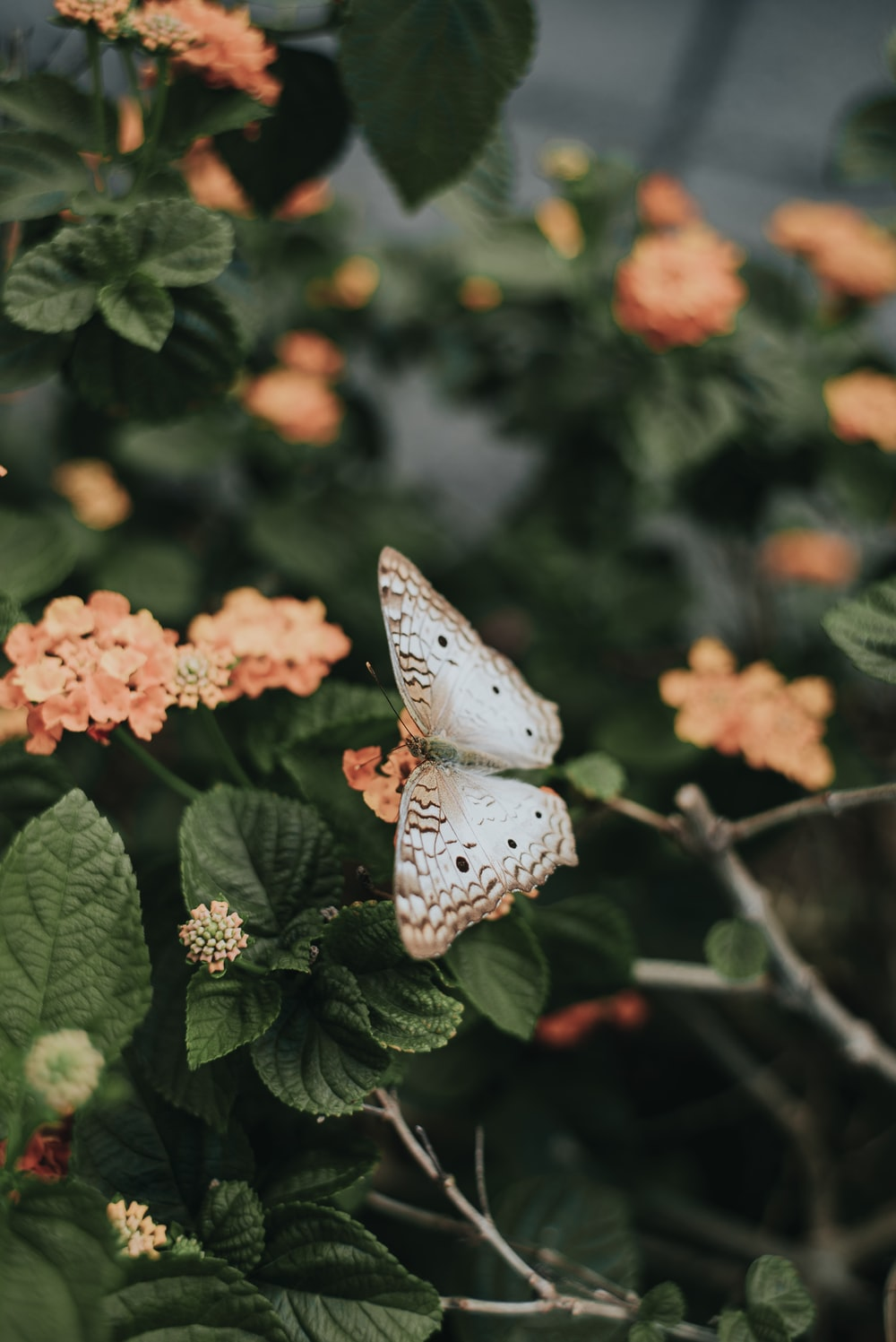 brown and white butterfly on orange flower