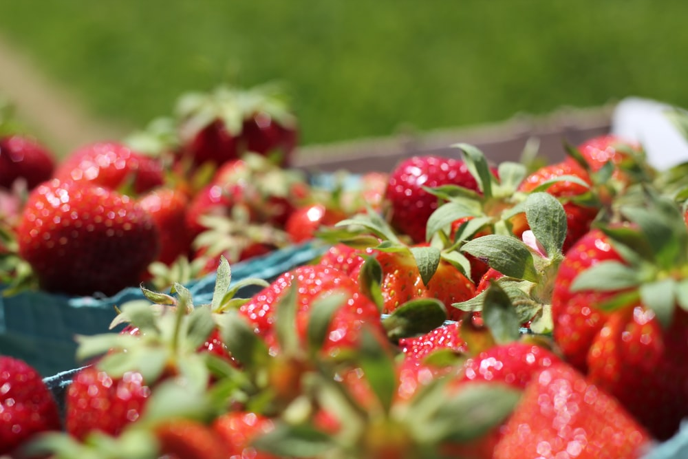 red strawberries on stainless steel tray