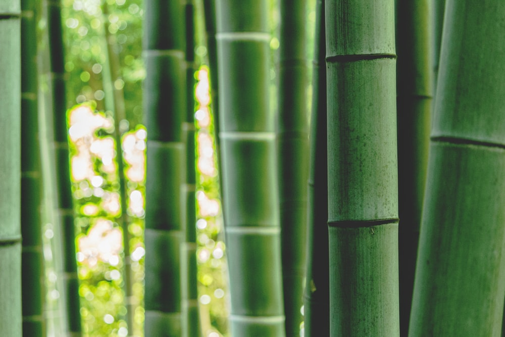 green bamboo tree during daytime