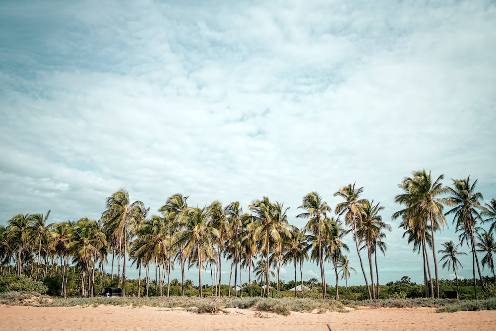 coconut trees on brown sand under white clouds during daytime