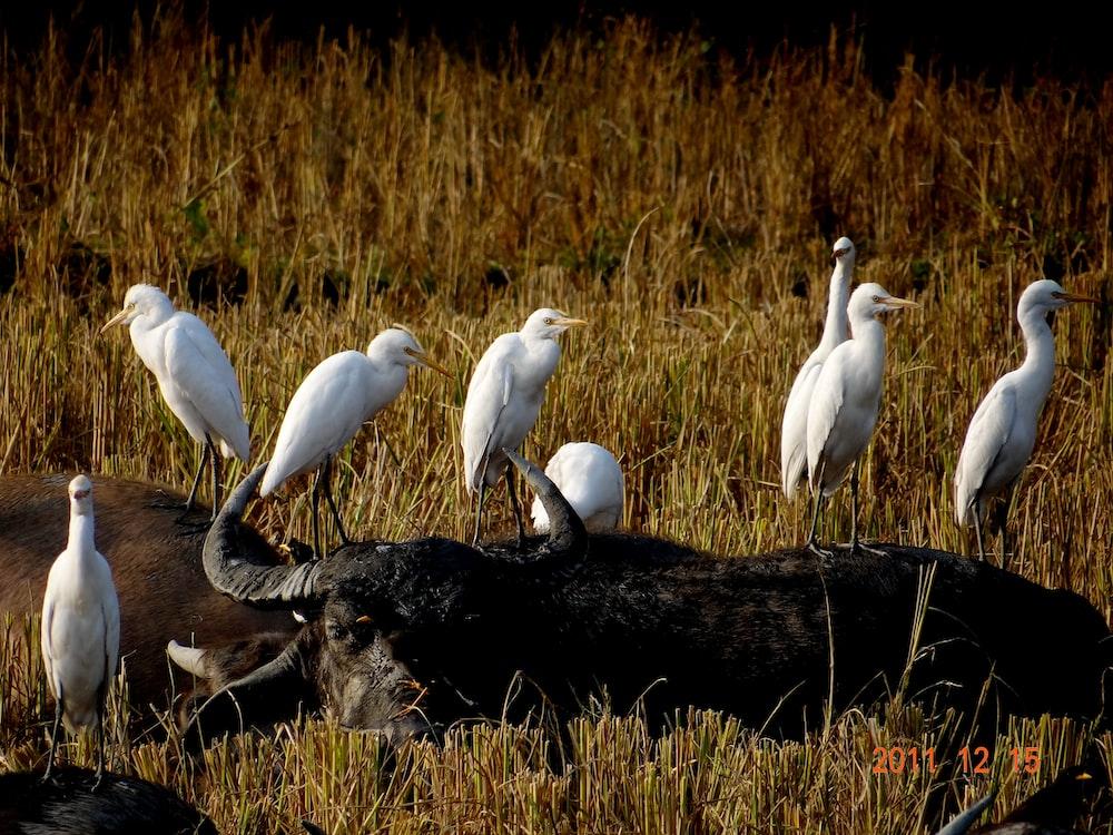 white birds on brown grass during daytime