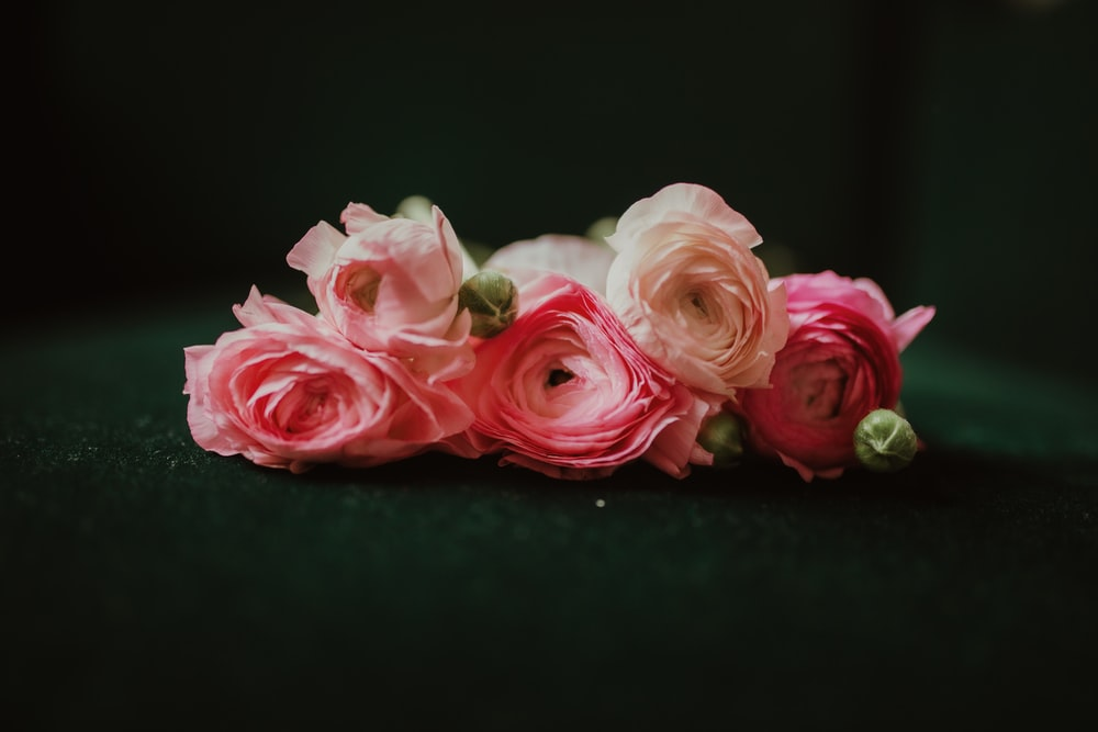 pink and white roses on black surface