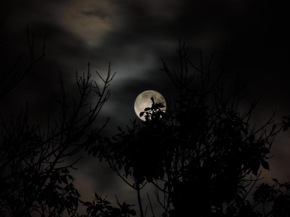 silhouette of tree under full moon