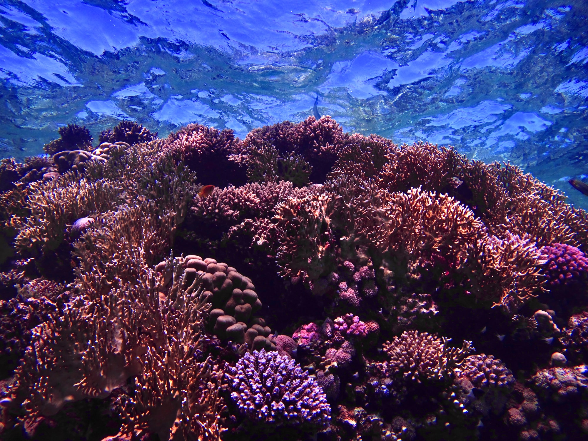 🌊 Scientists make history by becoming the first in the world to reproduce coral in human care