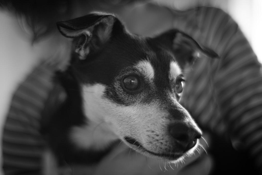스트레스 받은 강아지 진정 시키는 방법 3가지