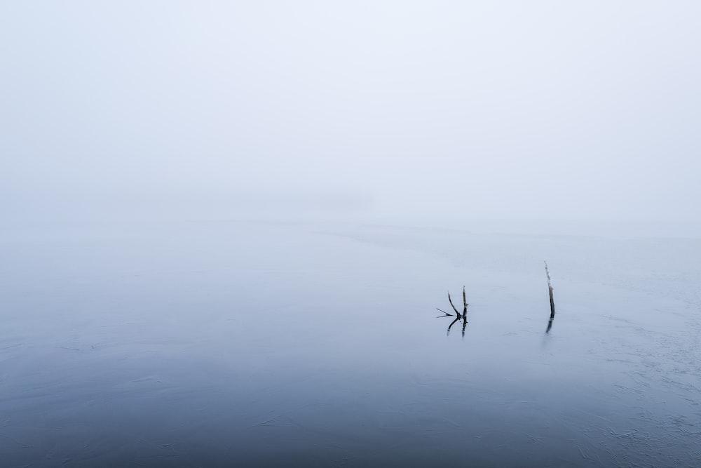 black leafless tree on foggy weather